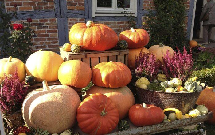 pumpkin-187885_1280